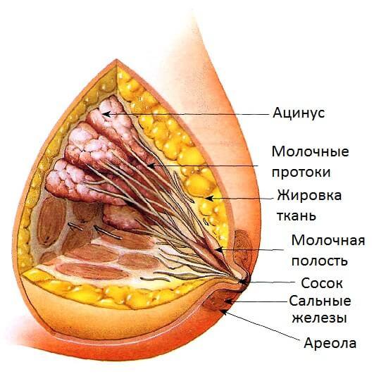 При аденозе страдают ацинусы