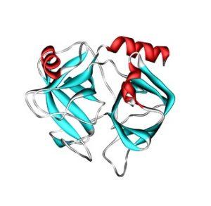 Простатспецифический антиген имеет белковую структуру