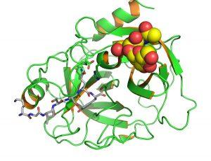 ПСА - это белок, вырабатываемый в предстательной железе