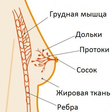 При болезни Минца в протоках развивается опухоль