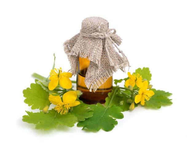 Чистотел помогает предотвратить рост кист и опухолей