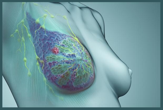 Клетки рака размножаются с высокой скоростью