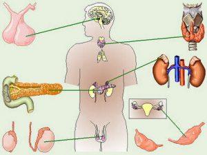 Эндокринолог занимается лечением заболеваний желез внутренней секреции