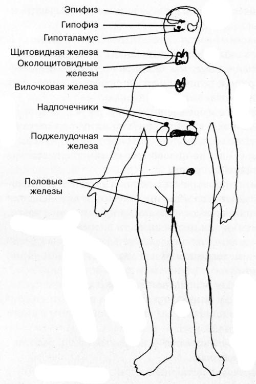 Врач устанавливает гормональные нарушения при их наличии