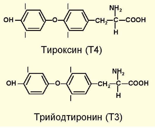 Йод поступает в организм человека благодаря синтезу Т4