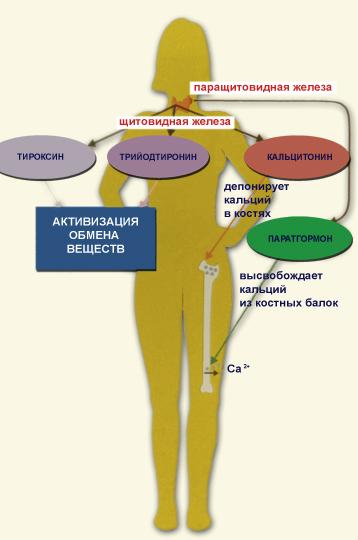 железы воспаление диета стол щитовидный
