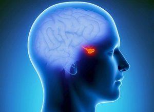 Вторичный гипотиреоз появляется в результате нарушений работы гипофиза