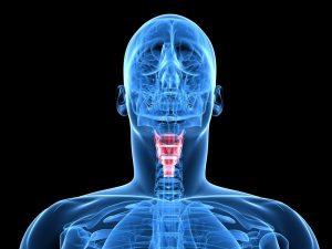 При гипотиреозе снижается выработка тиреоидных гормонов
