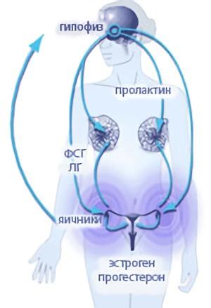 Изменения в груди происходят под воздействием гормонов