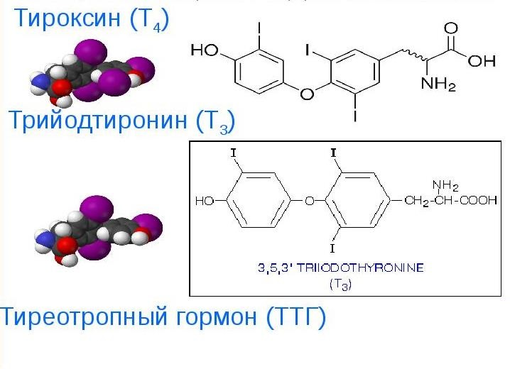 Щитовидная железа синтезирует гормоны Т3 и Т4