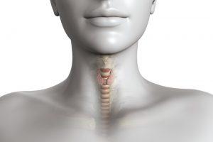 В компетенцию гинеколога-эндокринолога входит лечение заболеваний щитовидной железы