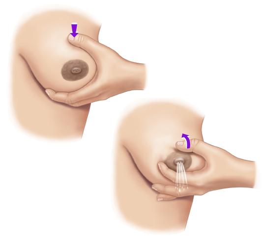 """Для ручного сцеживнаия грудь обхватывают буквой """"С"""""""