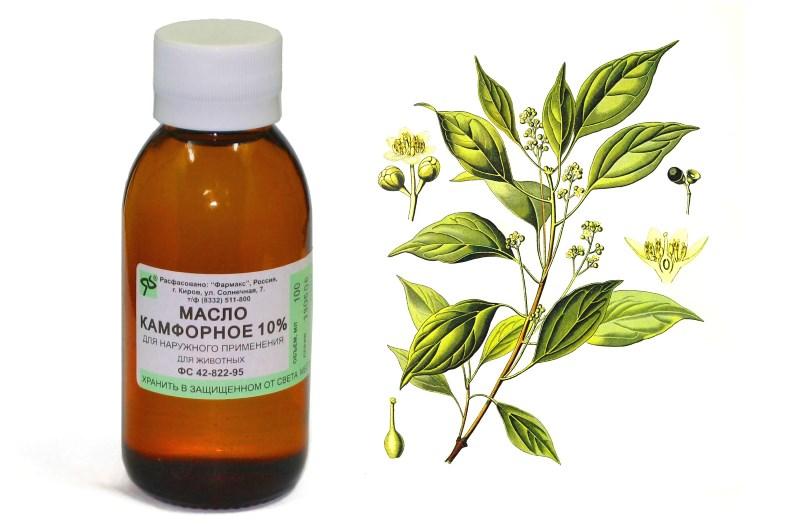 Камфорное масло снимает воспаление груди
