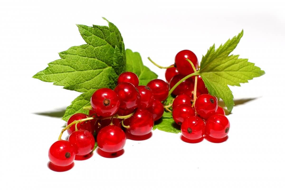 Красная смородина содержит витамин С и калий