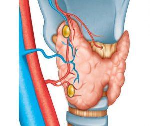 Усиление кровотока щитовидной железы происходит при гиперфункции
