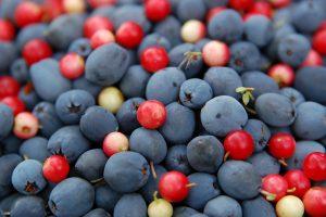 При заболеваниях щитовидной железы рекомендовано употреблять лесные ягоды