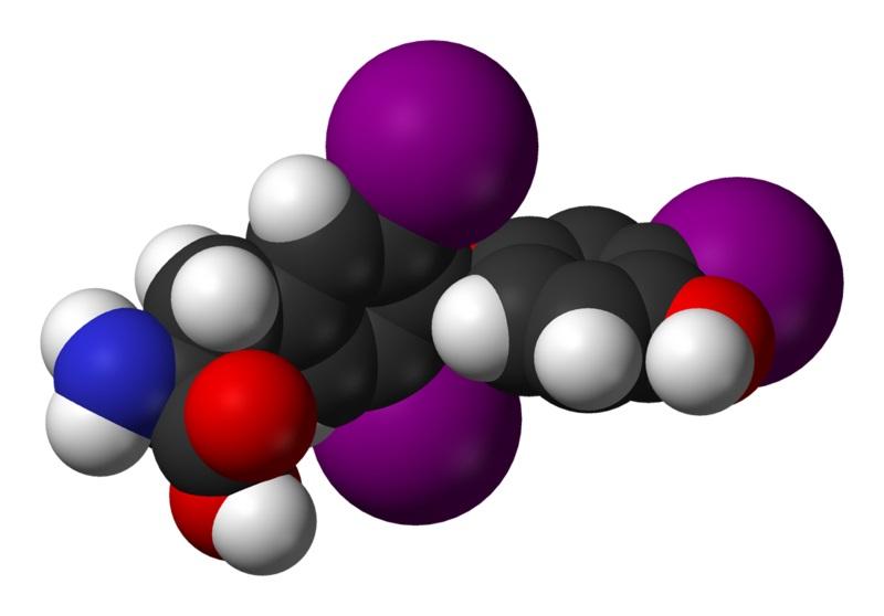 Молекула гормона Т3 состоит из трех атомов йода