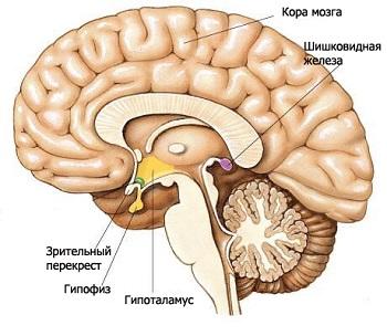 Гипотиреоз у детей может возникнуть в результате повреждения отдельных участков головного мозга