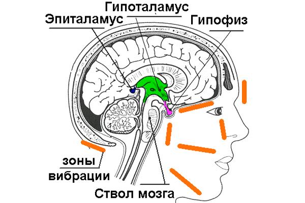 Причина скачка уровня ТТГ может быть в нарушения работы гипофиза