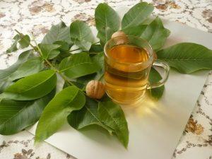 Лечение щитовидки проводится с помощью отвара зеленых орехов
