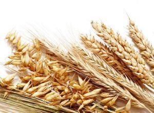 При заболеваниях щитовидной железы рекомендуется употреблять овес и пшеницу