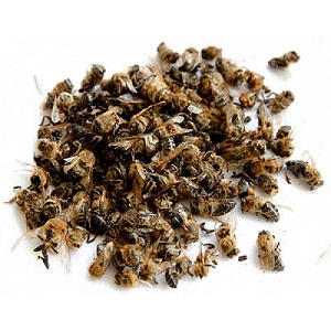 Для лечения аденомы предстательной железы используют пчелиный подмор