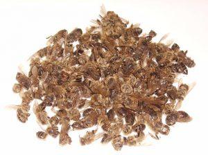 Подмор пчел - эффективное средство при аденоме простаты