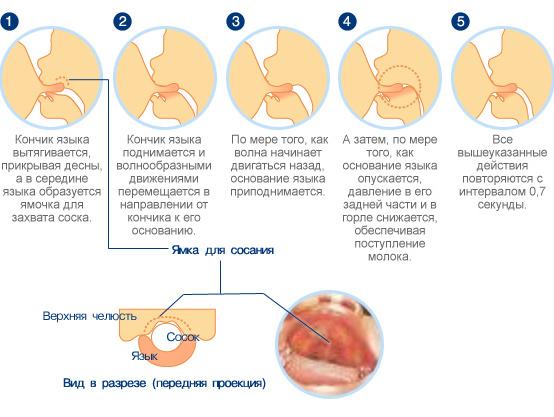 Необходимо следить за правильностью захвата груди