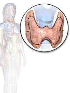 Увеличение щитовидной железы называется зобом