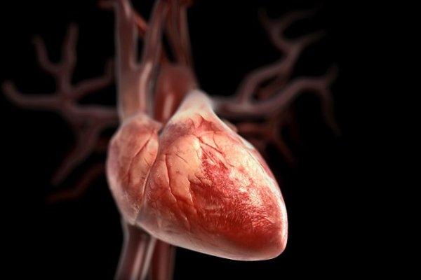 Баланс гормонов обеспечивает нормальную работу сердечной мышцы