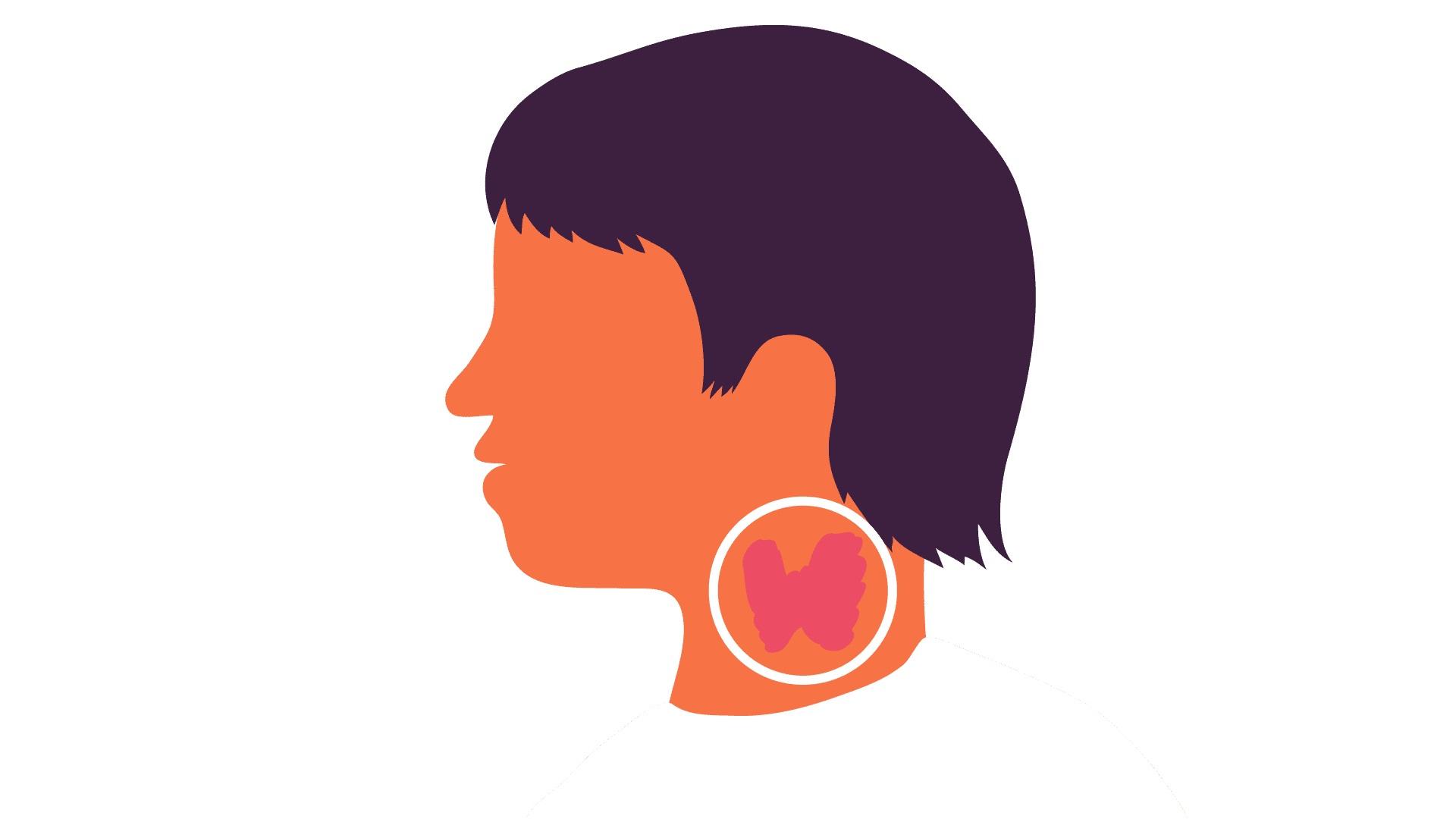 Функционирование щитовидной железы оказывает влияние на все органы и системы