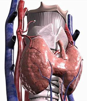 При диффузном зобе щитовидка увеличивается в размерах равномерно