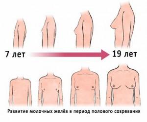смотреть фото развитие груди
