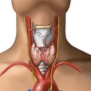 Уровень антител к пероксидазе повышается при повреждениях щитовидки