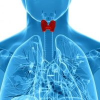 Щитовидная железа отвечает за регуляцию биологических процессов в организме человека