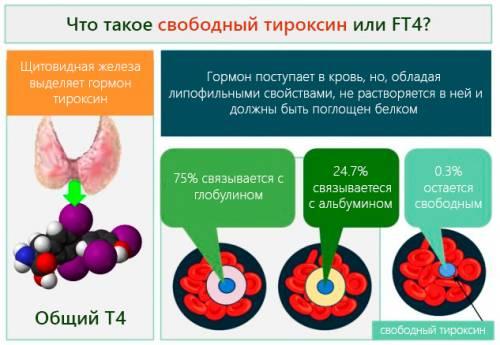Определение уровня свободного Т4 необходимо для оценки активности щитовидной железы