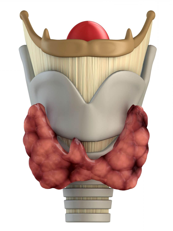 Тиреоидитом называют различные заболевания щитовидной железы воспалительного характера