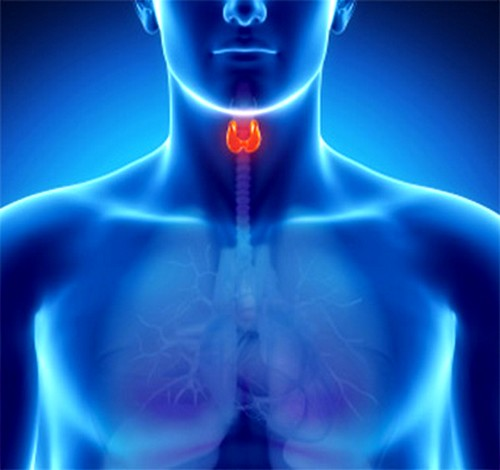Анализ на уровень ТТГ назначается при подозрениях на заболевания щитовидной железы