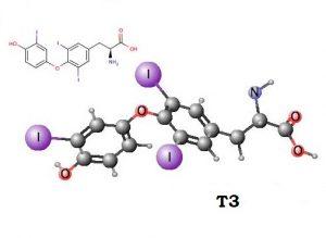 Йод участвует в синтезе гормона Т3