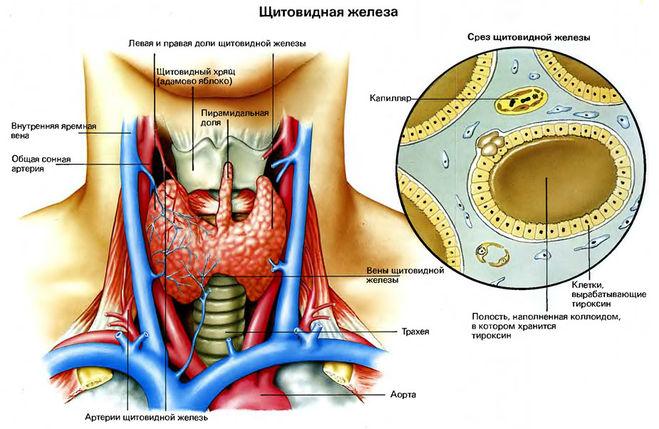 Разрастание сосудов возникает в результате соматических заболеваний