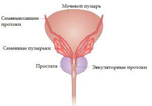 На запущенных стадиях фиброза у мужчины может развиться везикулит