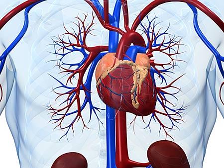 Врожденные заболевания сердечно-сосудистой системы могут стать противопоказанием