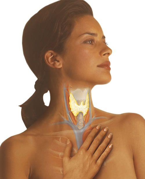 Отклонения в результатах анализа крови свидетельствуют о заболеваниях щитовидной железы