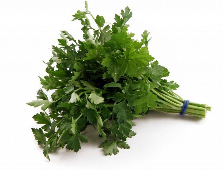 Зелень можно вводить с первых дней кормления