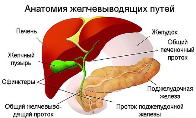 Фибромиома молочной железы: что это такое и как нужно лечить